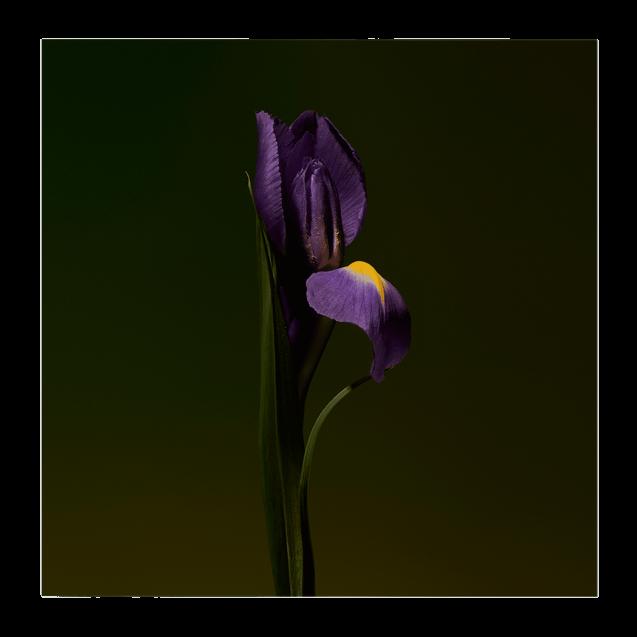 Iris Shot Extract 100 <span class='min_ml'> ML</span>