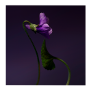 Violet Shot Extract 15 <span class='min_ml'> ML</span>